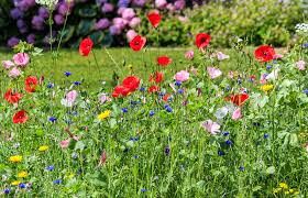 Red and pink flowers in a field